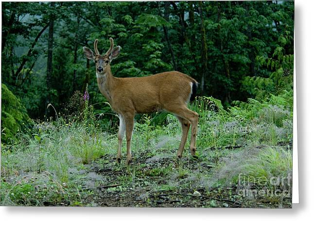 Greeting Card featuring the photograph Buck by Rod Wiens