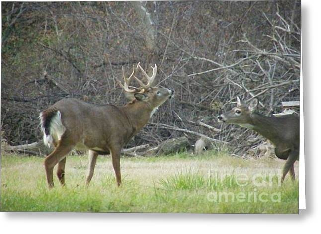 Greeting Card featuring the photograph Buck Romancing The Doe by Jim Lepard