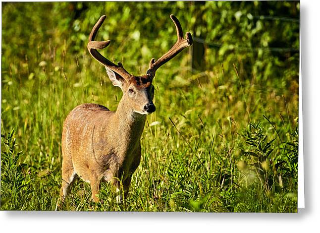 Greeting Card featuring the photograph Buck by Tyson and Kathy Smith