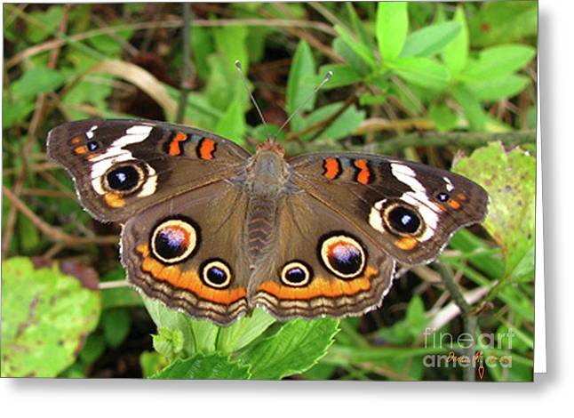 Greeting Card featuring the photograph Buckeye Butterfly by Donna Brown
