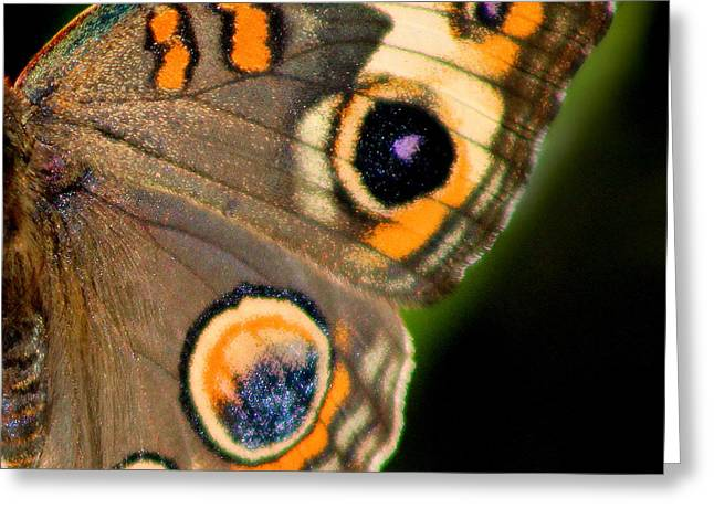 Buckeye Butterfly Wing Square Greeting Card by Karen Adams
