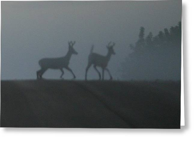 Bucks In Fog Greeting Card