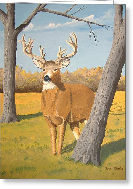 Bucky The Deer Greeting Card by Norm Starks