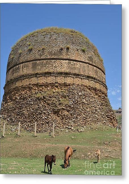 Buddhist Religious Stupa Horse And Mules Swat Valley Pakistan Greeting Card