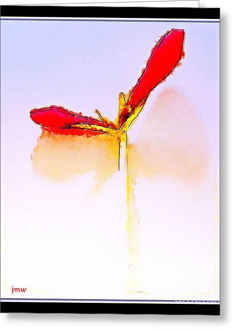 Budding Amaryllis  Greeting Card by Joseph Welsh