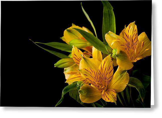 Greeting Card featuring the photograph Budding Flowers by Sennie Pierson