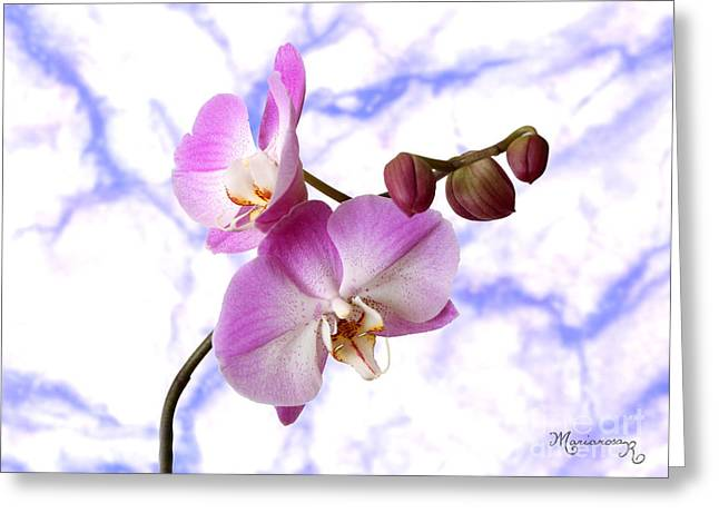 Budding Orchids Greeting Card by Mariarosa Rockefeller