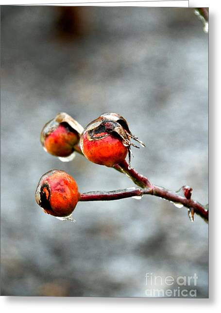 Buds On Ice Greeting Card