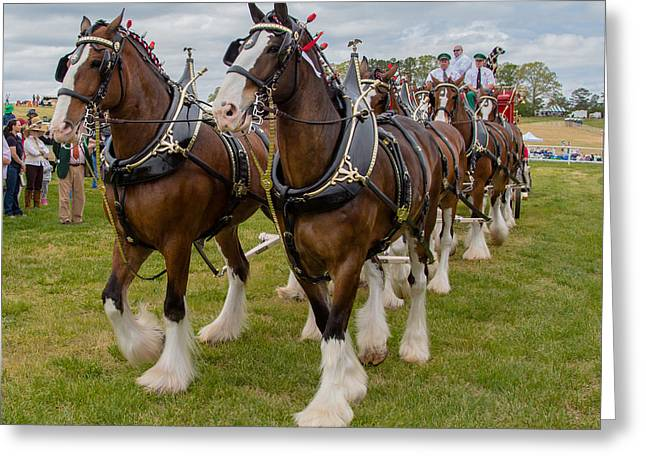 Budweiser Clydesdales Greeting Card