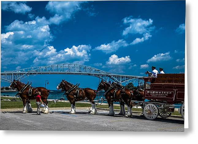 Budweiser Clydsdales And Blue Water Bridges Greeting Card
