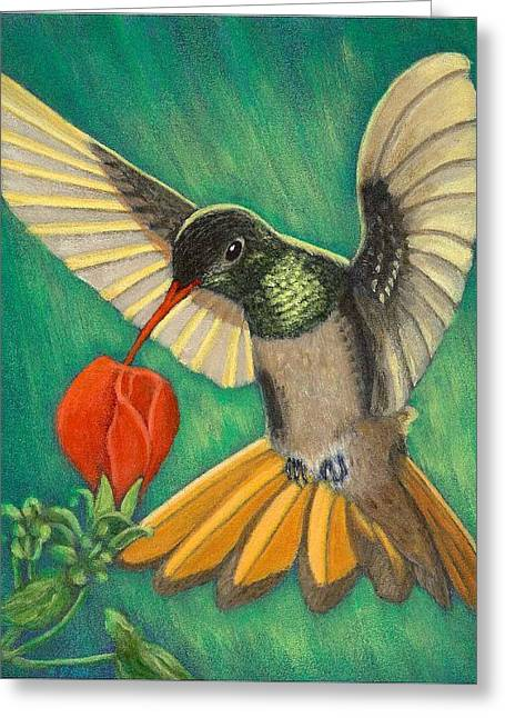 Buff-bellied Hummingbird Greeting Card
