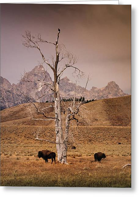 Greeting Card featuring the photograph Buffalo And Tetons by Janis Knight