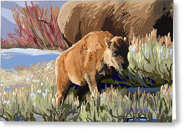 Buffalo Calf Greeting Card