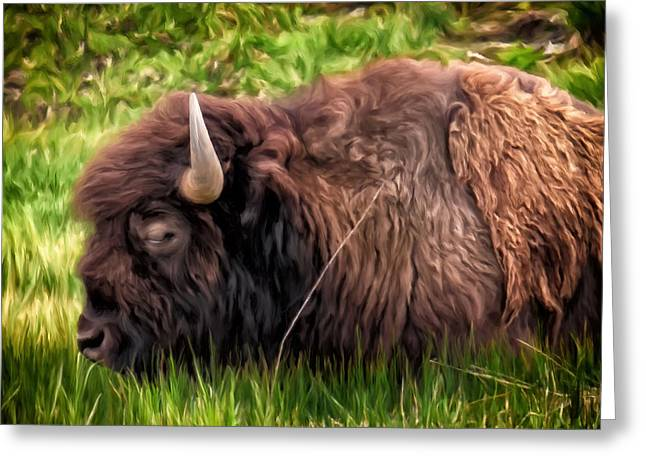 Greeting Card featuring the painting Buffalo Cat Nap by Michael Pickett