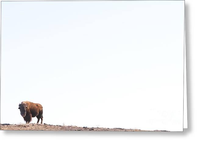 Buffalo Country Greeting Card