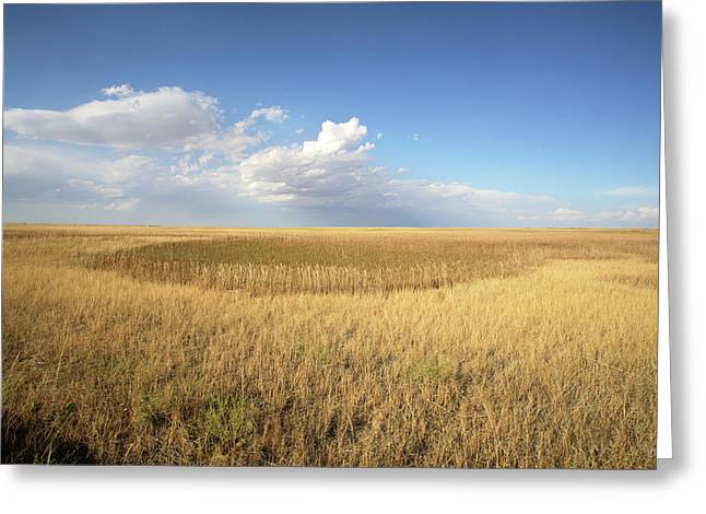 Buffalo Gap National Grassland Greeting Card by Peter Falkner/science Photo Library