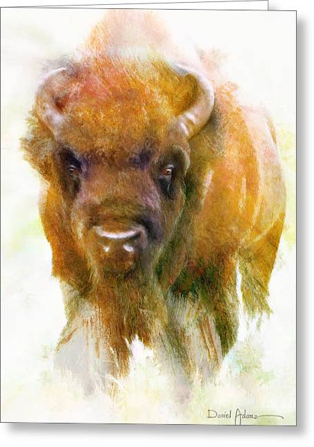 Da176 Buffalo II Daniel Adams Greeting Card