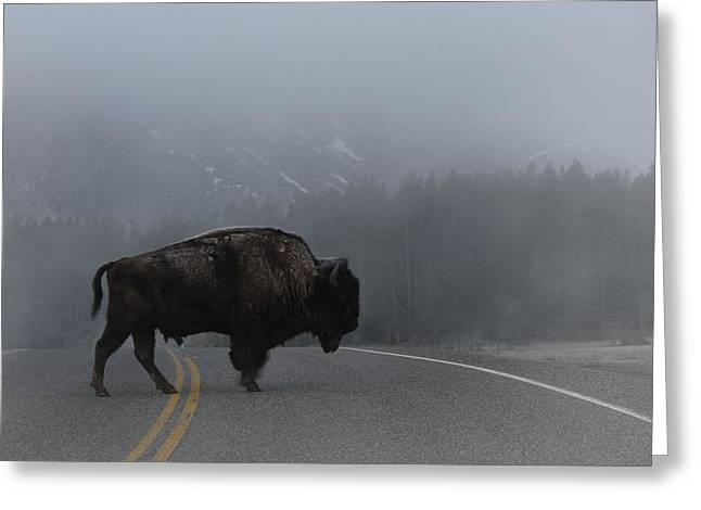 Buffalo In The Mist Greeting Card