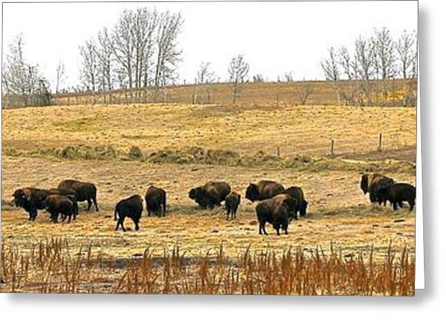 Buffalo Late Fall Greeting Card by Brian Sereda