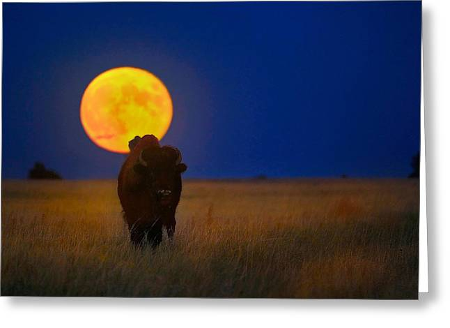 Buffalo Moon Greeting Card
