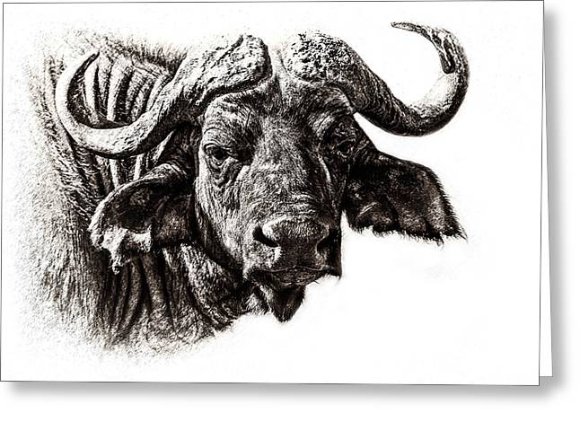 Buffalo Sketch Greeting Card