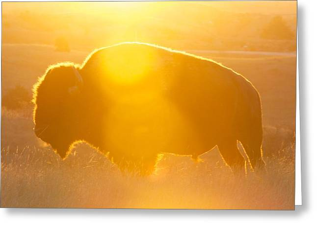 Greeting Card featuring the photograph Buffalo Sunrise by Kevin Bone