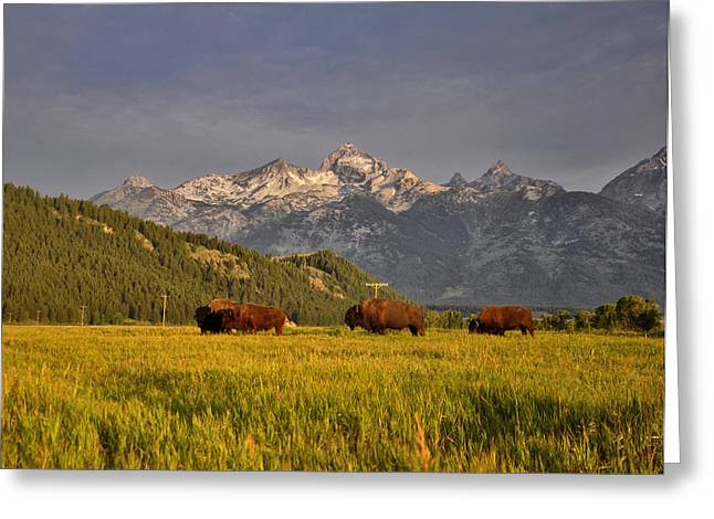 Buffalo Sunrise Greeting Card by Rob Hemphill