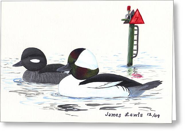 Bufflehead Pair On A Calm Afternoon Greeting Card by James Lewis