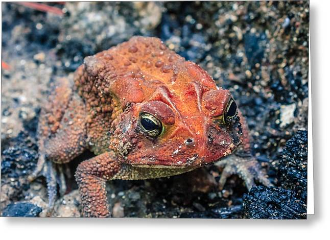Greeting Card featuring the photograph Bufo Terrestris by Rob Sellers