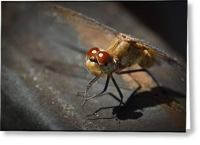 Bug-eyed Greeting Card by Christine Nunes