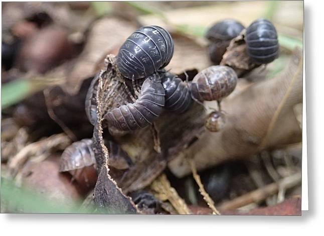 Bug Life Greeting Card