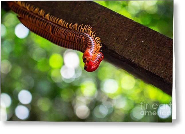 Bug Love Greeting Card by Will Cardoso