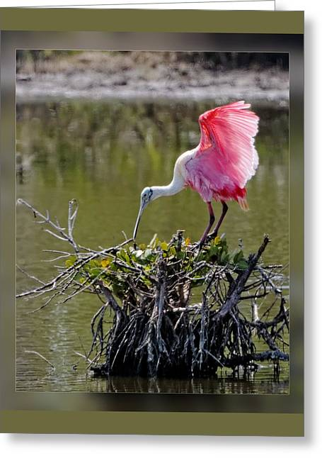 Building A Nest Greeting Card by Dawn Currie