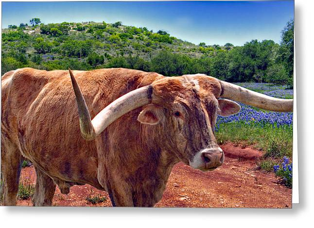 Bull And Bluebonnets Greeting Card by David and Carol Kelly