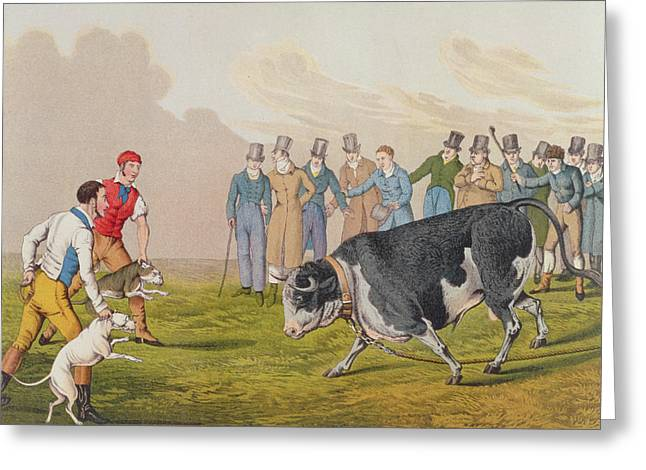 Bull Baiting Greeting Card by Henry Thomas Alken