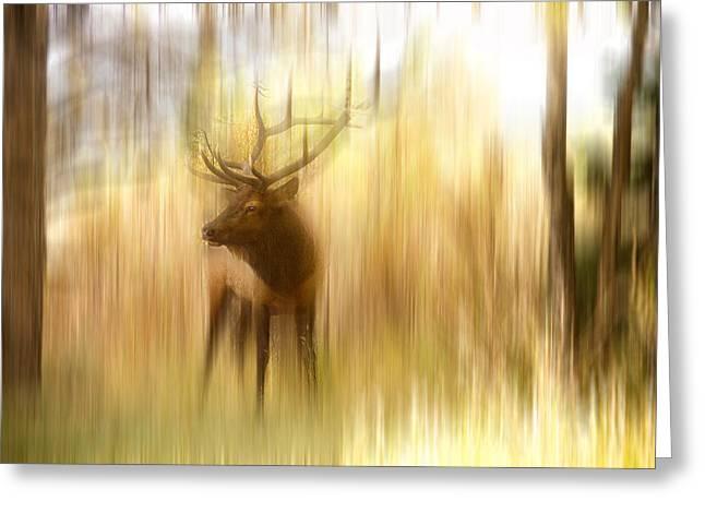 Bull Elk Forest Gazing Greeting Card