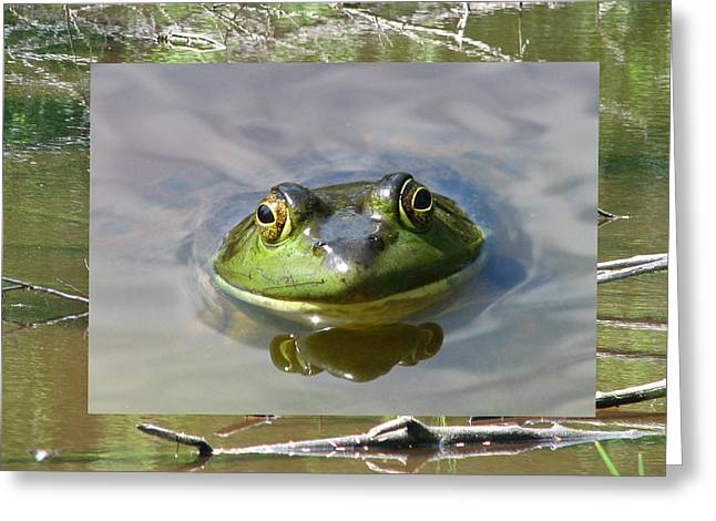 Bull Frog And Pond Greeting Card