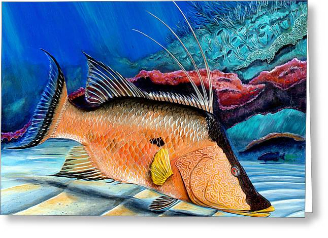 Bull Hogfish Greeting Card by Steve Ozment