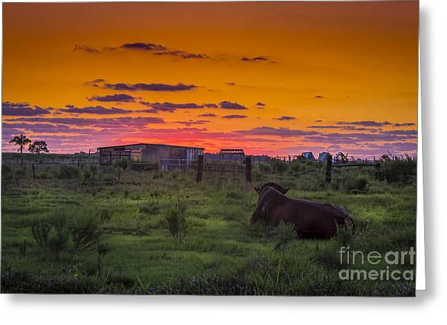 Bull Sunset Greeting Card