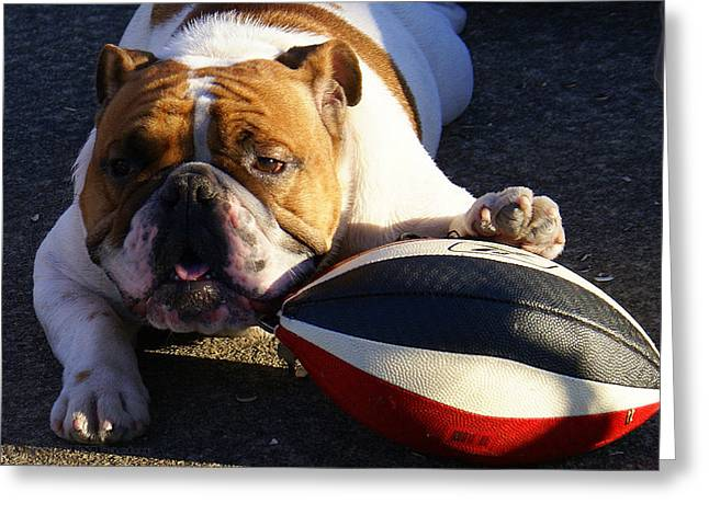 Bulldog And Ball Greeting Card by DerekTXFactor Creative