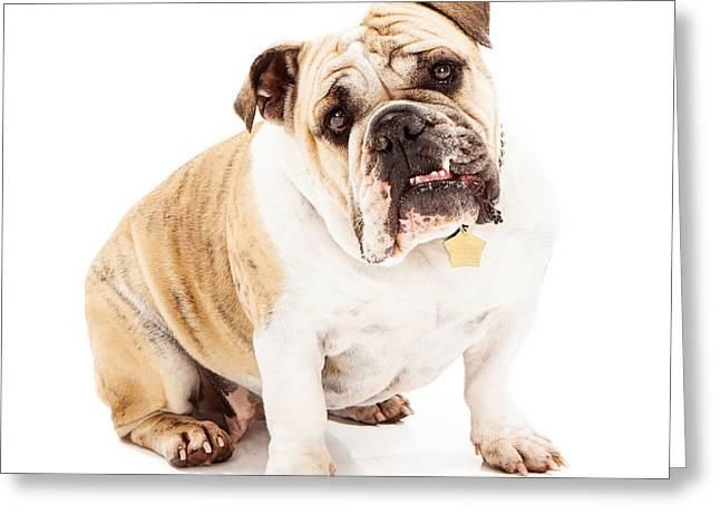 Bulldog Looking Attentive  Greeting Card