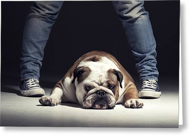 Bulldog Greeting Card by Samuel Whitton