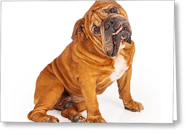 Bulldog Sitting With Tilted Head Greeting Card