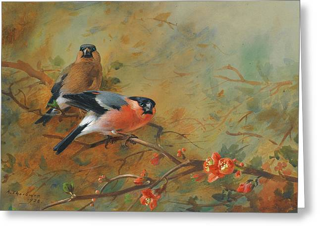 Bullfinches And Pyrus Japonica Greeting Card by Archibald Thorburn