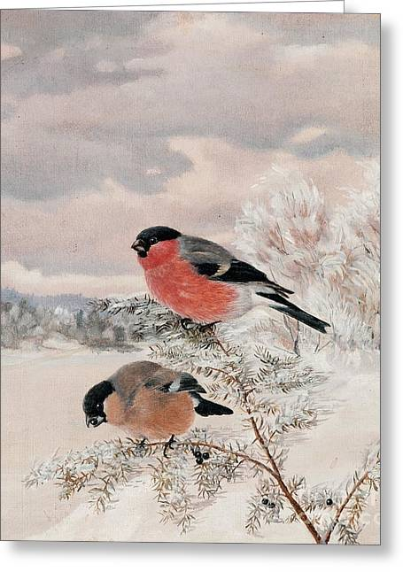Bullfinches Greeting Card by Celestial Images