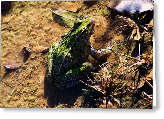Bullfrog 2 Greeting Card by Chris Flees