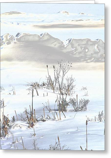 Bulrushes In Snow Greeting Card by Carolyn Reinhart