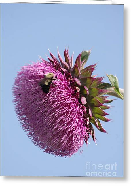 Bumble Bee And Thistle Greeting Card