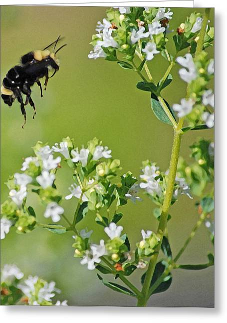 Bumble Bee Greeting Card by Kjirsten Collier