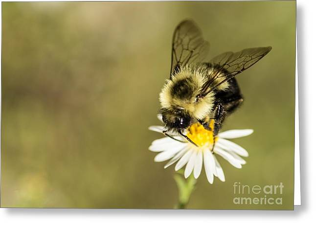 Bumble Bee Macro Greeting Card